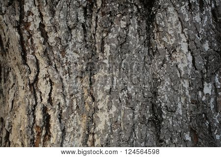 Tree bark texture grey outer layer surface cork protects plant on woody background