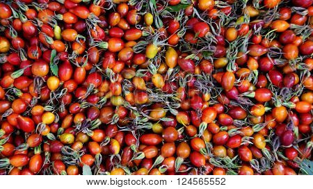 photo of a rosehip berries, picked and scattered for drying