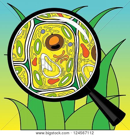 Vector illustration biological cells grass looking through a magnifier