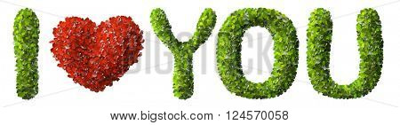 I LOVE YOU made of green leaves isolated on white