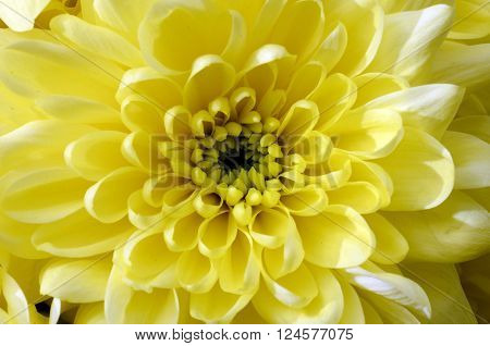 Details of flower for background or texture