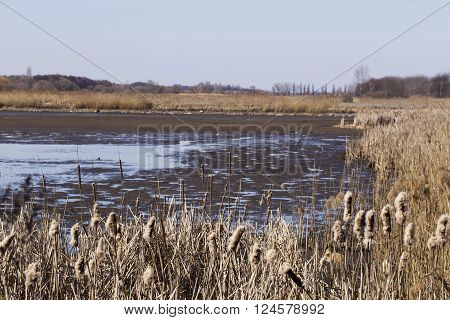 a dry reeds around the dried lake