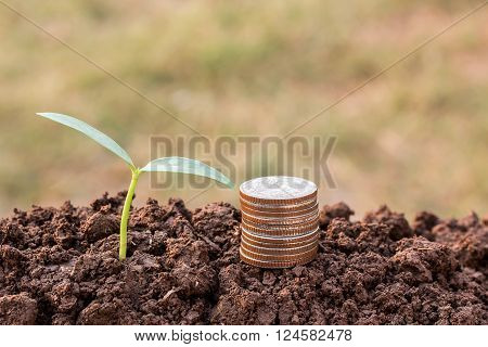 Coin and green seedling growing out of soil in sunshine with blurred background