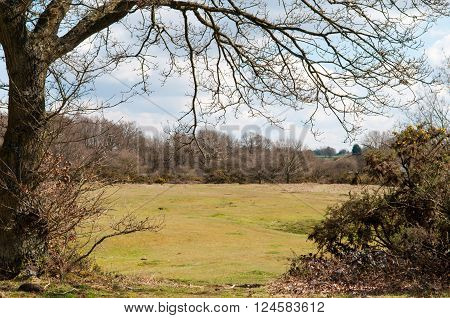 Countryside Scenery