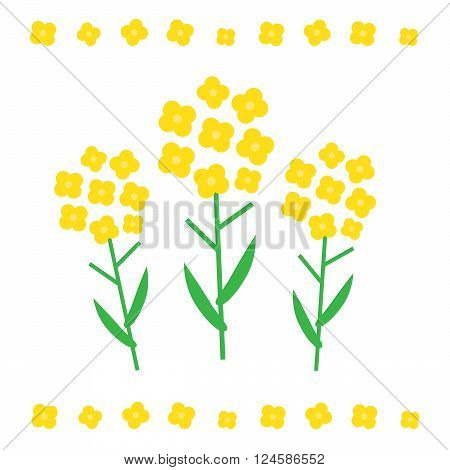 Canola flower vector illustration. Canola flower concept in flat style. Canola flowers
