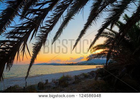 palm silhouette by the shore at dusk. Shot in Sardinia Italy