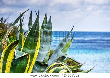 close up of an agave by the sea in Sardinia Italy