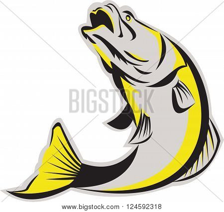 Illustration of a jumping barramundi or Asian sea bass (Lates calcarifer) on isolated background done in retro style.