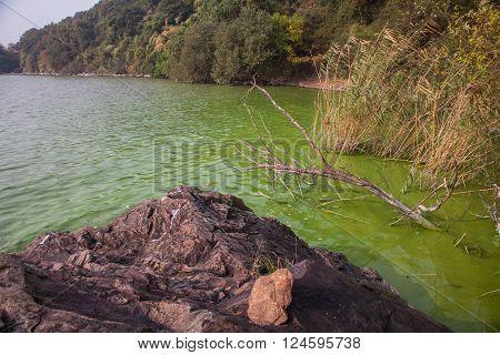 Cyanobacteria In Taihu Lake