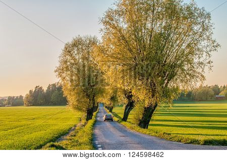 VIKOBLANDET, SWEDEN - MAY 14: Car driving throug a tree lined avenue on May 14, 2009 in the countryside of Vikbolandet. Springtime in Sweden is fresh, green and flowering with long bright days.