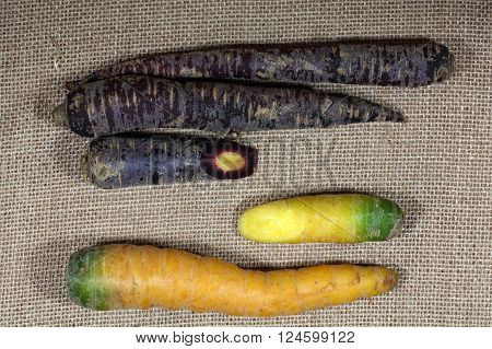 Different colored carrots with some blue carrots. Blue carrots are a special type of the usual orange carrots.