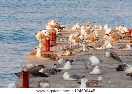 A flock of seagulls on the concrete breakwater.