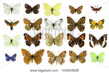 real colorful butterflies isolated in white background