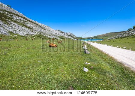 Landscapes around Lake Enol one of the famous lakes of Covadonga Asturias Spain