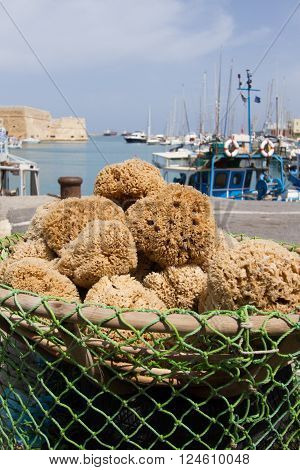 Freshly caught natural sponges from the sea