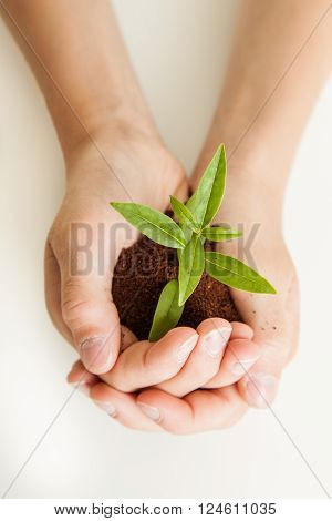 Young Boy Cradling A New Plant Seedling