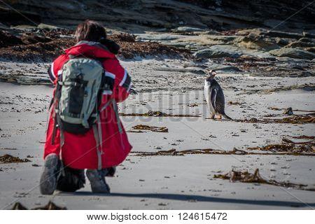 Photographer shooting gentoo penguin on sandy beach