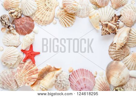 shells and starfish on white paper mix