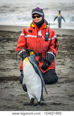 Woman kneeling on beach beside king penguin ** Note: Visible grain at 100%, best at smaller sizes