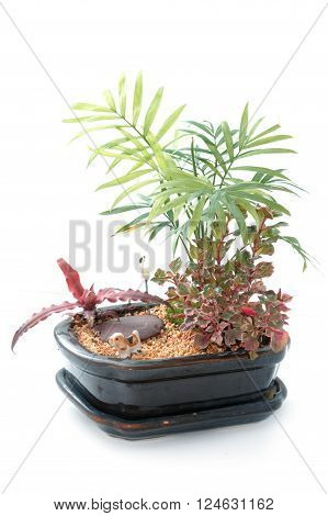 Miniature Garden in a Pot on white