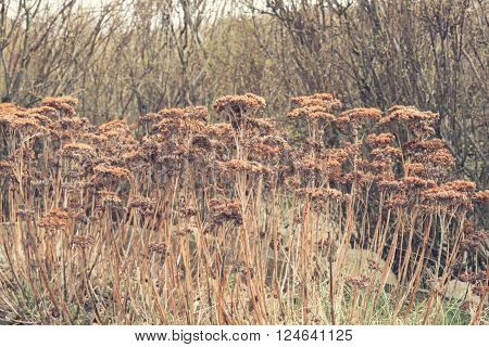 Withered Flowers In A Garden