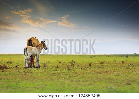 little horse and mom freedom in green meadow