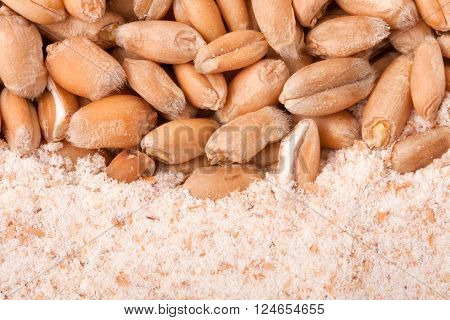 wheat flour with whole wheat background close up