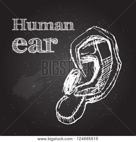 Sketch vector illustration. Human ear. Hand-drawn on chalkboard