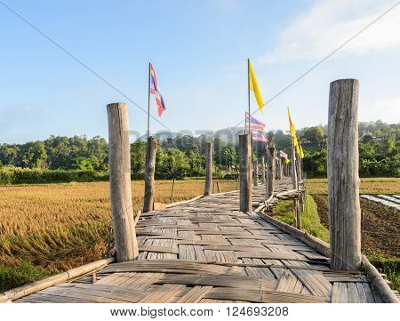 Old Bamboo bridge pass rice field to the temple