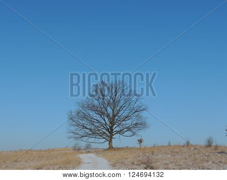 Single oak tree in the steppe winter scenery