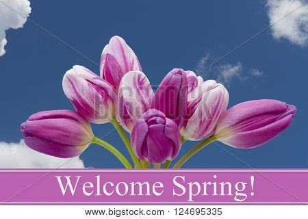 Welcome Spring Greeting, Some tulips with blue sky and text Welcome Spring