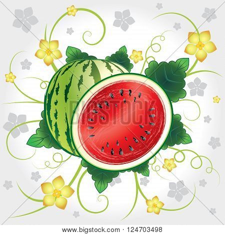 Watermelon whole and slices with leaves and blossom