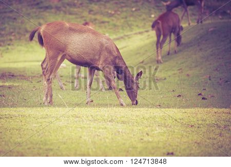 Deer In Summer Forest. Animals In Natural Environment. Vignette And Vintage Style.