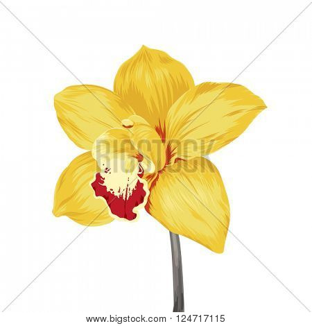 single yellow orchid flower isolated on white