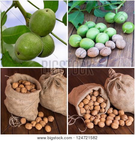 collage set of photos of walnut on a tree branch in a bag close-up