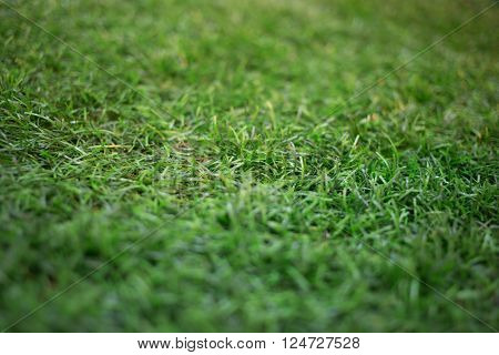 artificial grass. artificial grass. artificial grass.artificial grass
