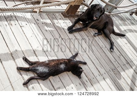 Black Homeless Cat And Dog Rest In The Shadow