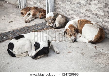 Group Of Homeless Dogs Sleep On The Street