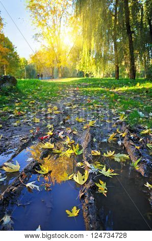 Beautiful autumn landscape with puddle. Autumn is time