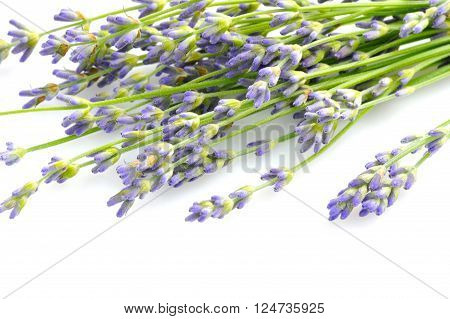 Lavender Flowers (lavandula) On A White Background