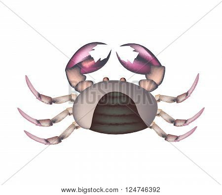Cuisine and Food Illustration of Field Crab with Legs and Crab Claws Isolated on A White Background.