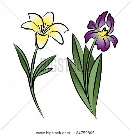 Set of two outlined flowers. Lily and iris In sketch hand drawn style. Vector illustration