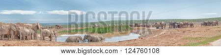 A large group of elephants at a muddy waterhole