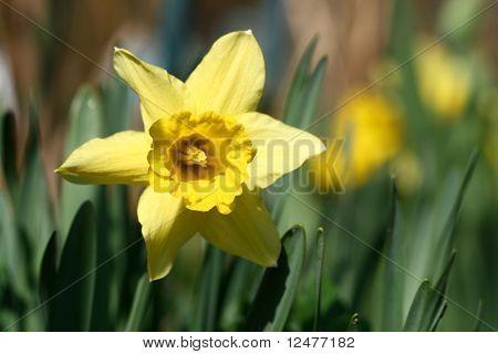 spring yellow flower