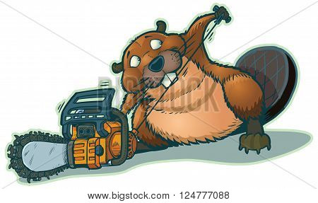 A cute beaver starting a chainsaw. He looks a little guilty to be