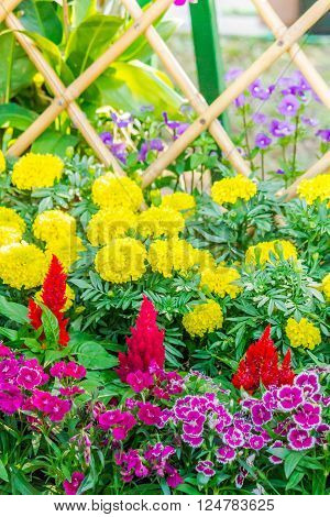 Beautiful Flower Garden On Summer.