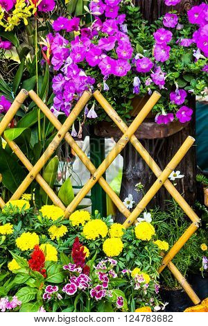 Picket fence surrounded by flowers in a front yard on summer.