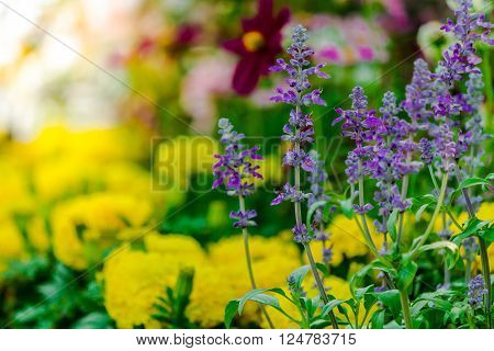 Landscaped flower garden with lots of colorful blooms with sun flare.