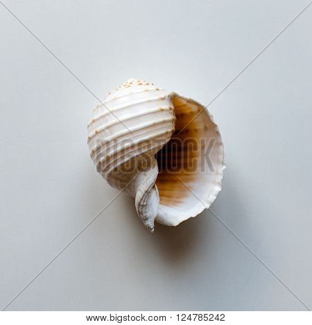 Large ocean shell on white table with copy space. Top view