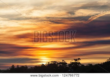Beautiful wild sunset landscepe with Australian coastal vegetation silhouettes and cloudy sky